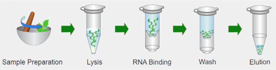 the total rna isolation kit provides a fast simple and cost effective method for isolation of total rna from plant samples detergents and chaotropic salt
