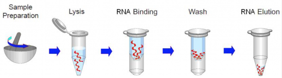 fairbiotechs tissue total rna isolation kit provides a fast simple and cost effective method for isolation of total rna from tissue sample